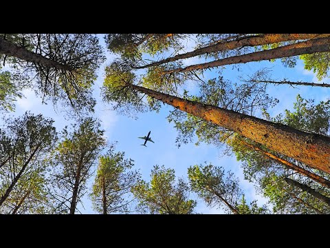 Natural Habitat Adventures | Traveler Resources | Daily Dose of Nature Webinars | Watch Past Daily Dose of Nature Webinars | WEBINAR [Video]